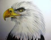 Yellow Beak Drawings - Patriot by Julianna Wells