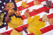 Autumn Prints Metal Prints - Patriotic Autumn Colors Metal Print by James Bo Insogna