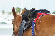 Trail Ride Posters - Patriotic Mule Poster by Lynda Dawson-Youngclaus