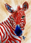 4th July Painting Prints - Patriotic Zebra aceo Print by Brenda Thour