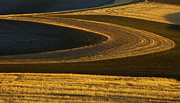 Wheatfields Photo Prints - Patterns of Gold Print by Mike  Dawson