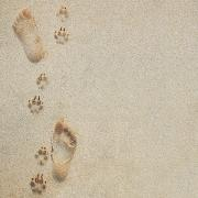 Dog Paw Print Framed Prints - Paw and Footprints 2 Framed Print by Brandon Tabiolo - Printscapes