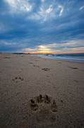 Dog Beach Print Prints - Pawprints Print by Mike Horvath