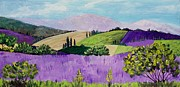 Lavender Fields Drawings Framed Prints - Pays de Sault Framed Print by Anastasiya Malakhova
