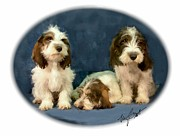 Puppies Digital Art - PBGV pups by Maxine Bochnia