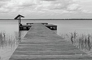 Waccamaw Posters - Peace and Serenity II-black and white Poster by Suzanne Gaff
