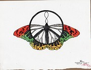 Limited Edition Drawings Framed Prints - Peace Butterfly  Framed Print by Anna Randolph