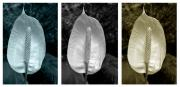Lily Digital Art Originals - Peace Lily Triptych by Terence Davis