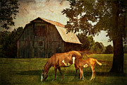 Pastoral Digital Art Posters - Peace of country living Poster by Lianne Schneider