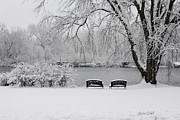 Park Benches Photos - Peace of the Storm by Linda Hall