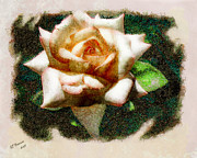 Arne J Hansen Framed Prints - Peace Rose Framed Print by Arne Hansen