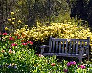 Benches Photos - Peaceful by Amy Fose
