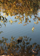 Golden Pond Prints - Peaceful Autumn Day Print by Carol Groenen