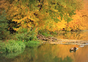 Yellow Leaves Posters - Peaceful Autumn River Poster by Carol Groenen