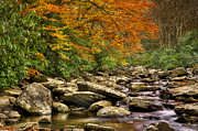 Gatlinburg Posters - Peaceful Autumn Stream Poster by Cheryl Davis