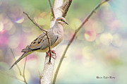Mourning Dove Posters - Peaceful Mourning Dove Poster by Bonnie Barry