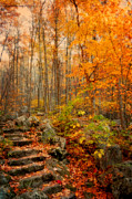 Autumn Photos Posters - Peaceful Pathway Poster by Kathy Jennings