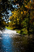 Colorado Greeting Cards Prints - Peaceful Poudre River Print by Dana Kern