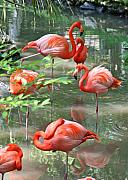 Flamingos Acrylic Prints - Peaceful Reflections Acrylic Print by LaMarre Labadie