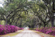 Azaleas Photos - Peaceful Resting Place by Eggers   Photography