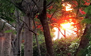 Pictures Photo Originals - Peaceful sight of forest trees and sunlight by Zoh Beny