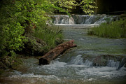Peaceful Stream Print by Cindy Rubin
