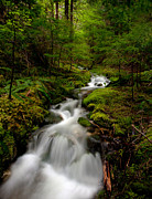 Moss Green Prints - Peaceful Stream Print by Mike Reid