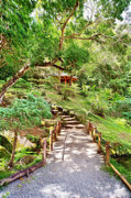 Japanese Tea Garden Prints - Peaceful Walk Print by Cheryl Young