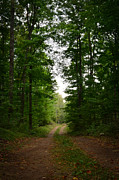Zach Edlund Prints - Peacefull Pathway Print by Zach Edlund