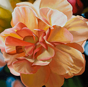 Photorealistic Framed Prints - Peach Begonia Framed Print by Sharon Von Ibsch