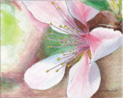 Peach Photo Originals - Peach Blossom by Lewis Lowell