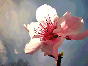 Fruit Tree Art Giclee Digital Art Posters - Peach Blossom Macro 2 Poster by Joyce Dickens
