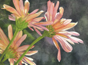 Web Painting Framed Prints - Peach Chrysanthemums Framed Print by Catherine G McElroy