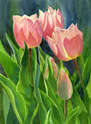 Pink Floral Posters - Peach Colored Tulips with Buds Poster by Sharon Freeman
