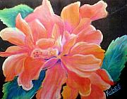 Flower Pastels - Peach Double Hibiscus by Susan Kubes