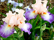 Peach Originals - Peach Iris Lovlies by Elizabeth Eells