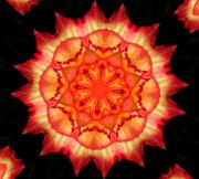 Flower Blooms Digital Art Prints - Peach Rose Kaleidoscope Print by Cathie Tyler
