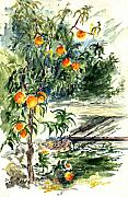 Peach Prints - Peach Tree Print by Lily Hymen