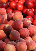 Peach Prints - Peaches and Nectarines Print by Carol Groenen