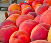 Gwyn Newcombe Metal Prints - Peaches For Sale Metal Print by Gwyn Newcombe