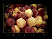 Wendy Fike Posters - Peaches Poster by Wendy Fike