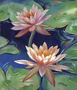 Gallery Wrapped Prints - Peachy Pink Nymphaea Water Lilies Print by Nancy Tilles
