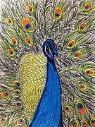 Peacock Drawings Metal Prints - Peacock-A-Boo Metal Print by Vanessa DiVittorio