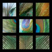 Compilation Prints - Peacock Feather Mosaic Print by Lisa Knechtel