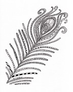 Pen  Drawings - Peacock Feather by Paula Dickerhoff