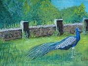 Stone Pastels Posters - Peacock Poster by Lisa Voight