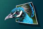 Free Mixed Media Framed Prints - Peacock Framed Print by Shane Bechler