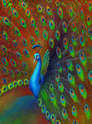 Iridescent Painting Posters - Peacock Spread Poster by Nancy Tilles