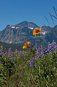 Many Glacier Photos - Peak of Summer by Katie LaSalle-Lowery