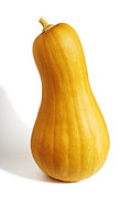 Fruit Shaped Prints - Pear Pumpkin Print by Carlos Caetano